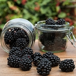 Christmas Mulberry Fragrance Oil