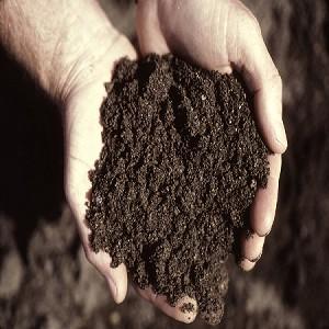Dirt Fragrance Oil